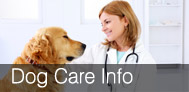 Pet Dental Care Calgary